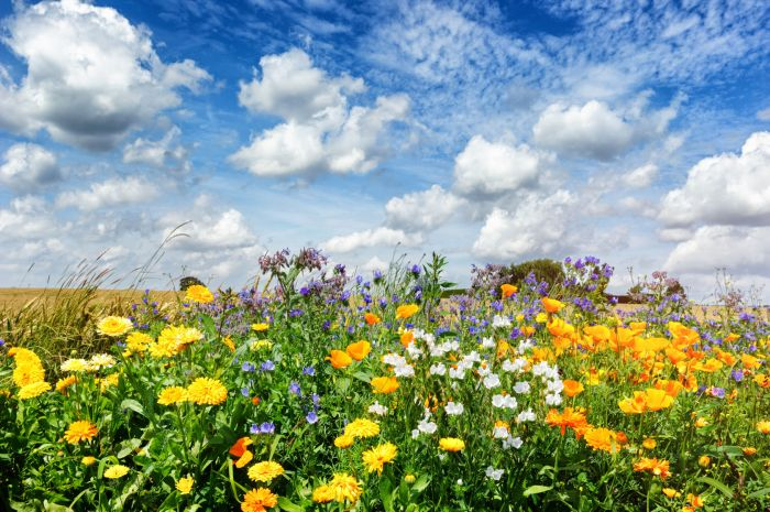 30933556 - landscape with colorful summer flowers